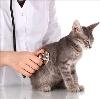 Ветеринарные клиники в Кондопоге